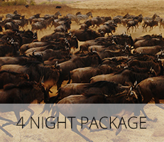4 Night Package