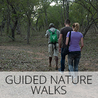 Guided Nature Bush Walk