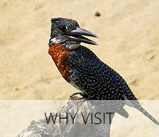 Why Visit